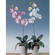 Orhidee in ghiveci 60 cm (h), culoare alb